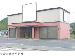 日本羽合猫科病院